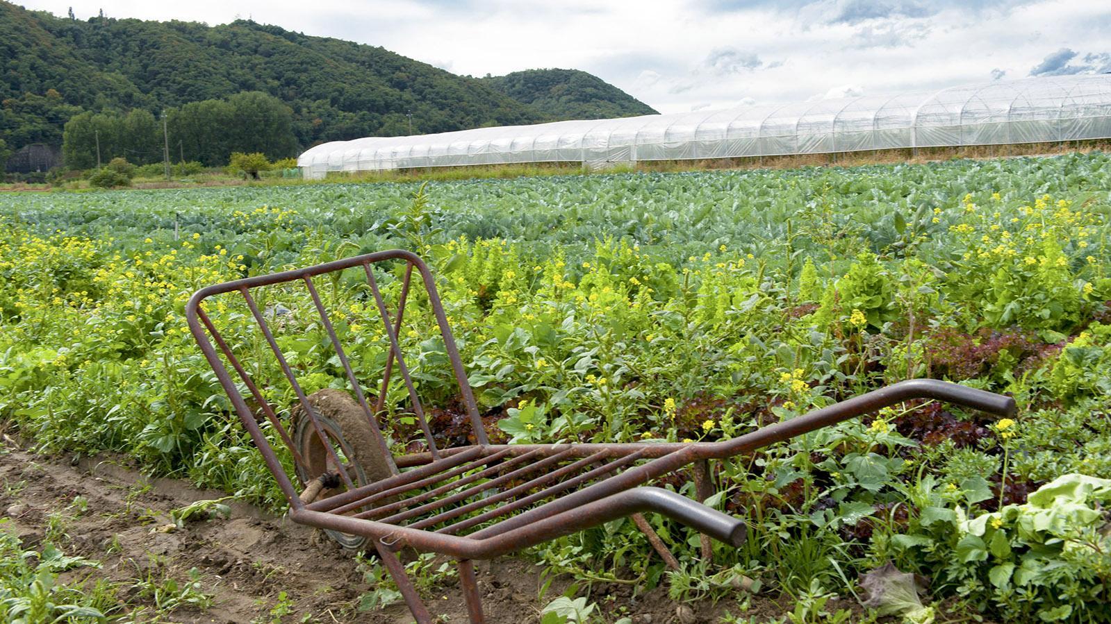 Gemüsenanbau im Rhône-Tal. Foto: Hilke Maunder