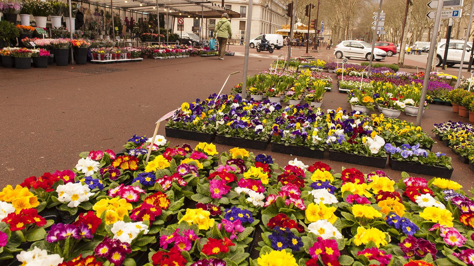Auf dem Boulevard verbreitet ein kleiner Blumenmarkt Frühlingsgefühle. Foto: Hilke Maunder