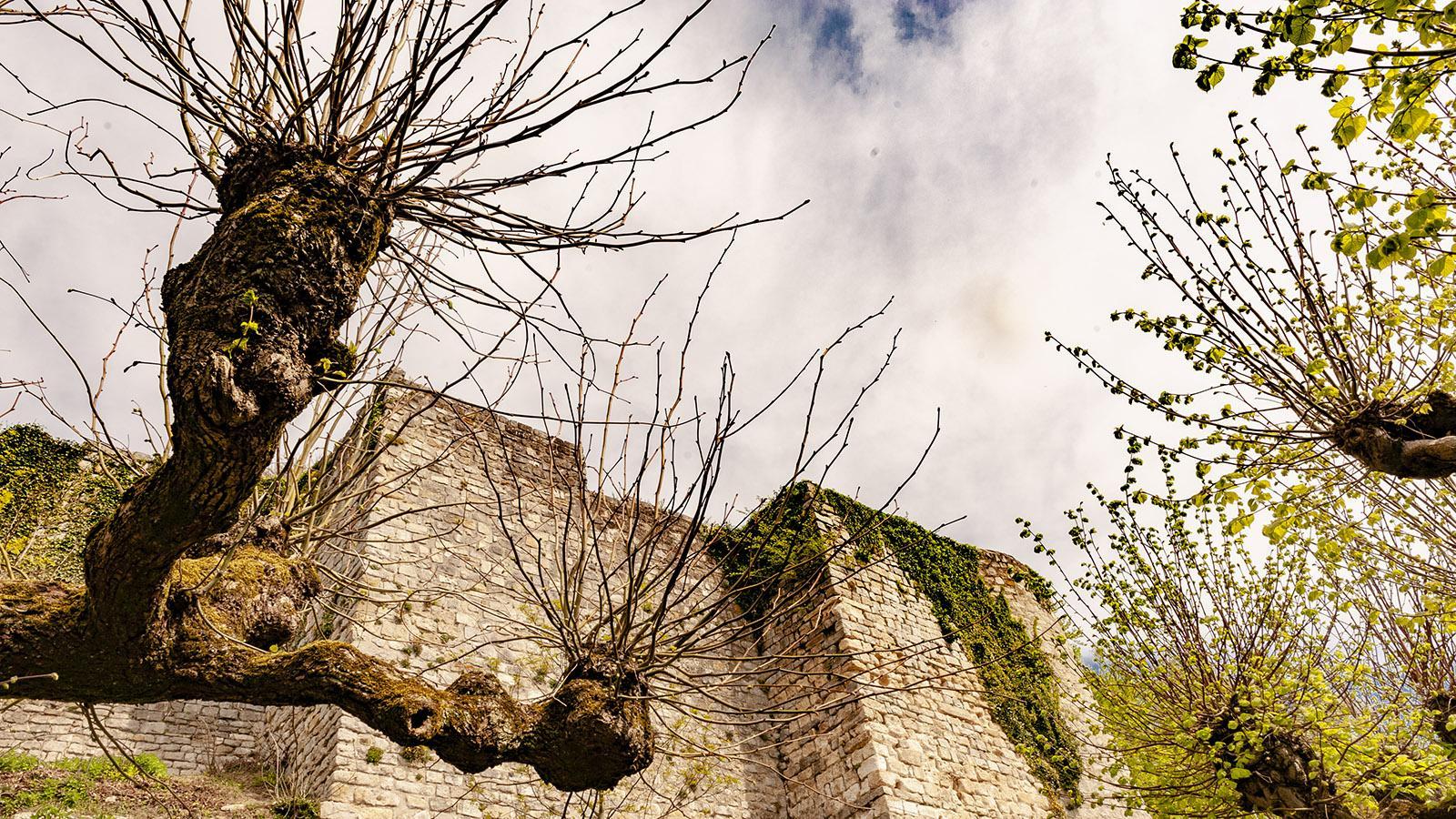Wehrhaft: die Burgruine von Château-Thierry