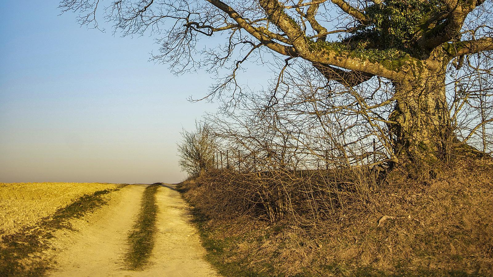 Diagonale der Leere: in den Ardennen bei Jarnac. Foto: Hilke Maunder