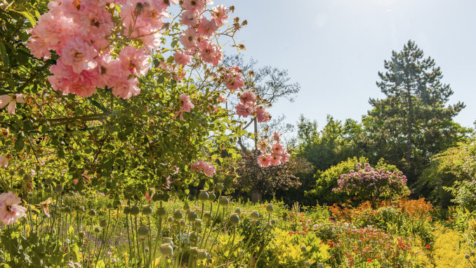 Giverny: der Garten von Claude Monet im Juni. Foto: Hilke Maunder