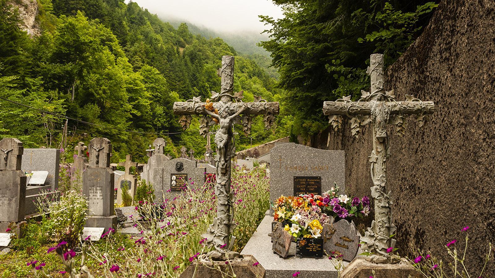 Die Blüten und Hennen von La Fajolle - Mein Frankreich