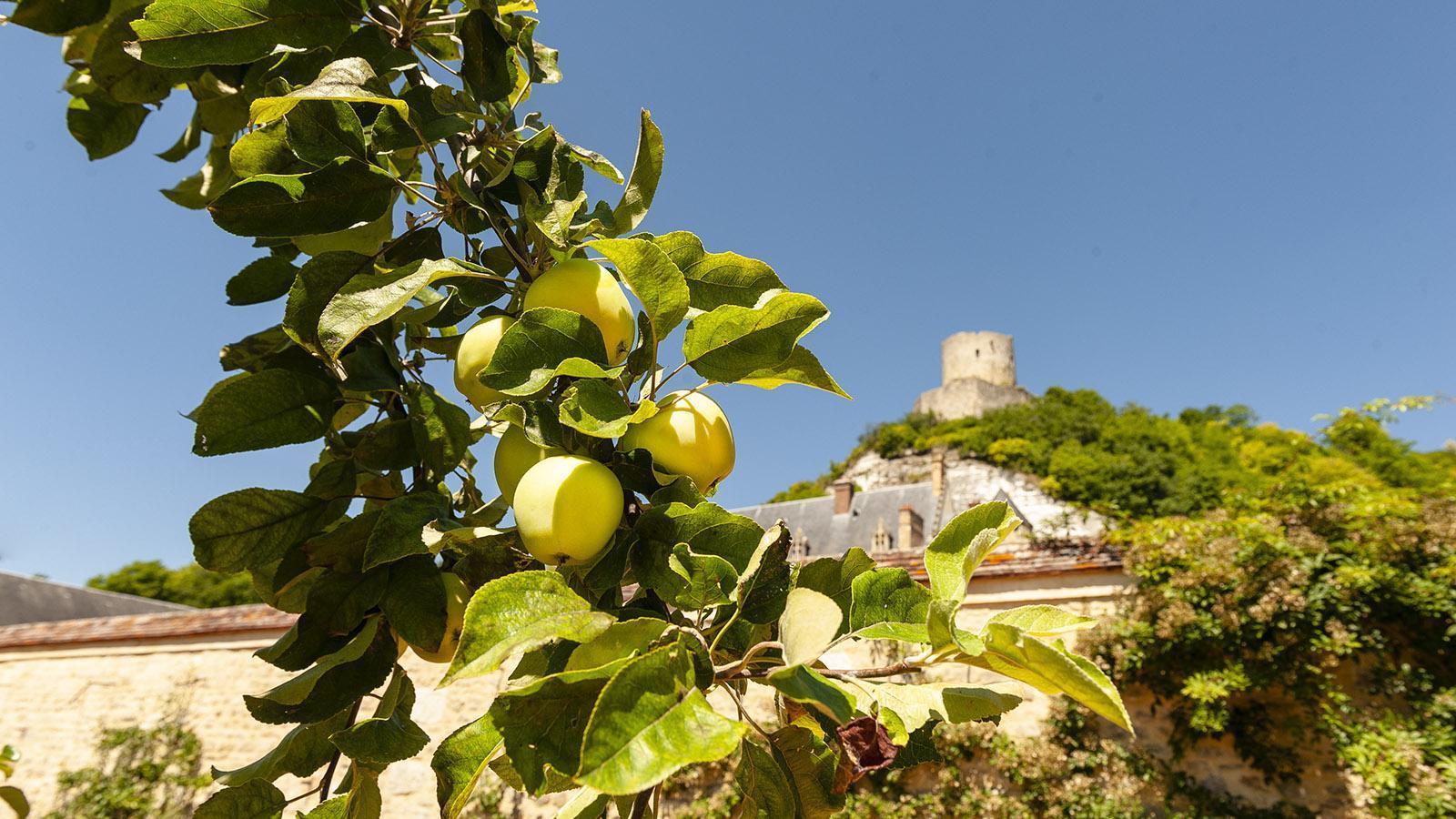 La Roche-Guyon: Im Küchengarten des Herzogsschlosses reifen die Äpfel. Foto: Hilke Maunder