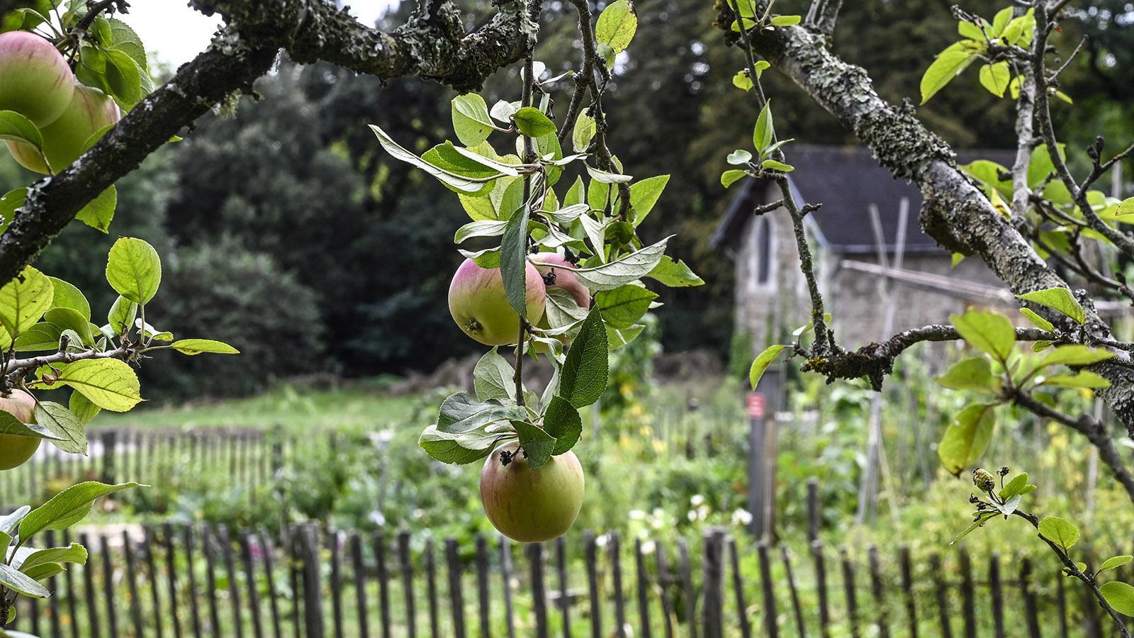 Voyages à Nantes: Im Parc des Oblates wachsen auch zahlreiche alte Apfelsorten. Foto: Hilke Maunder