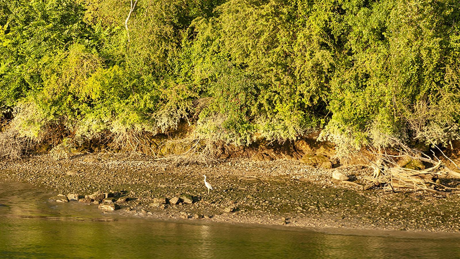 Seine Comtesse: von der Reling aus sieht man Wasser- und Watvögel. Foto: Hilke Maunder