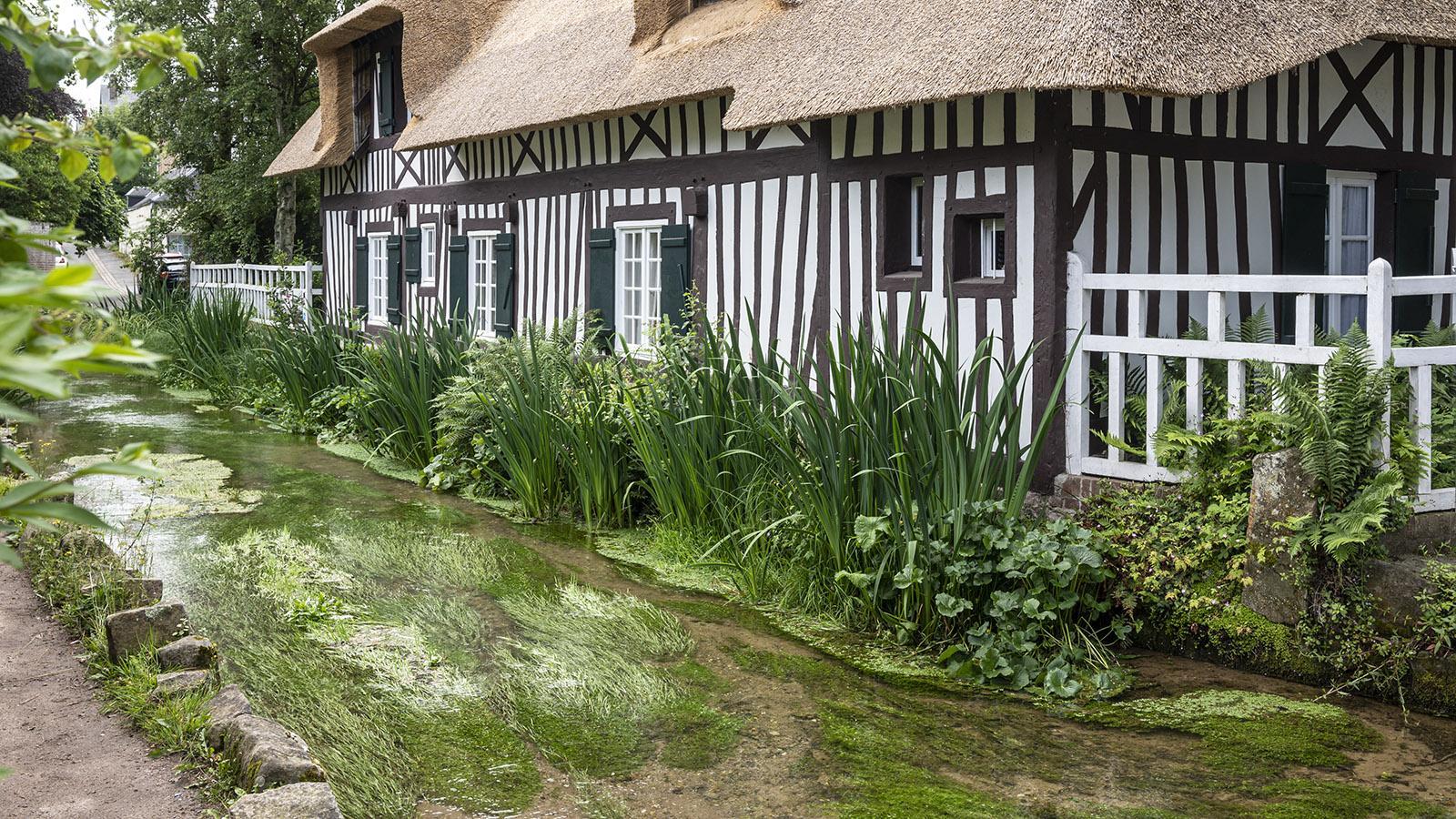 Die Veules in Vezles-les-Roses. Der kleine Ort hört zu den schönsten Dörfern Frankreichs. Foto: Hilke Maunder