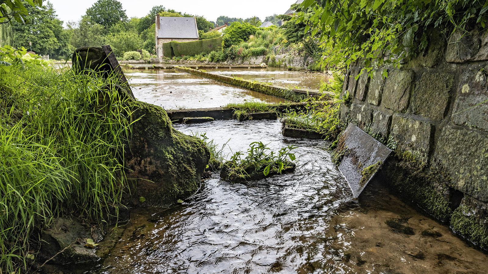 Die Wasserkressezucht von Veules-les-Roses. Foto: HIlke Maunder