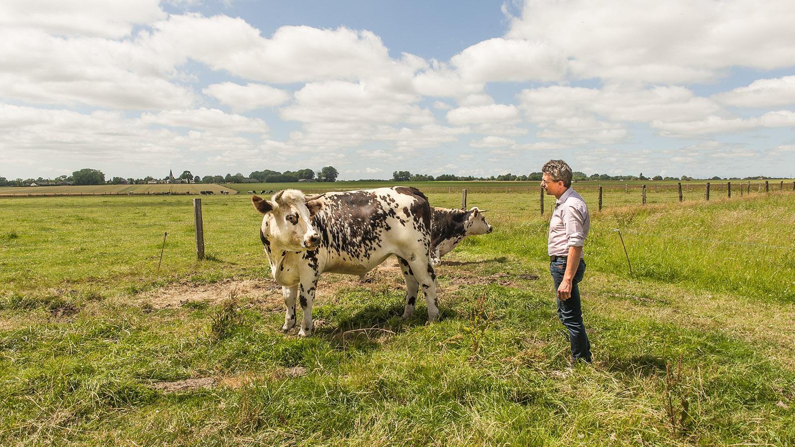 Boeuf Cidré: François-Xavier Craquelin züchtet ganz besondere Rinder. Foto: Hilke Maunder