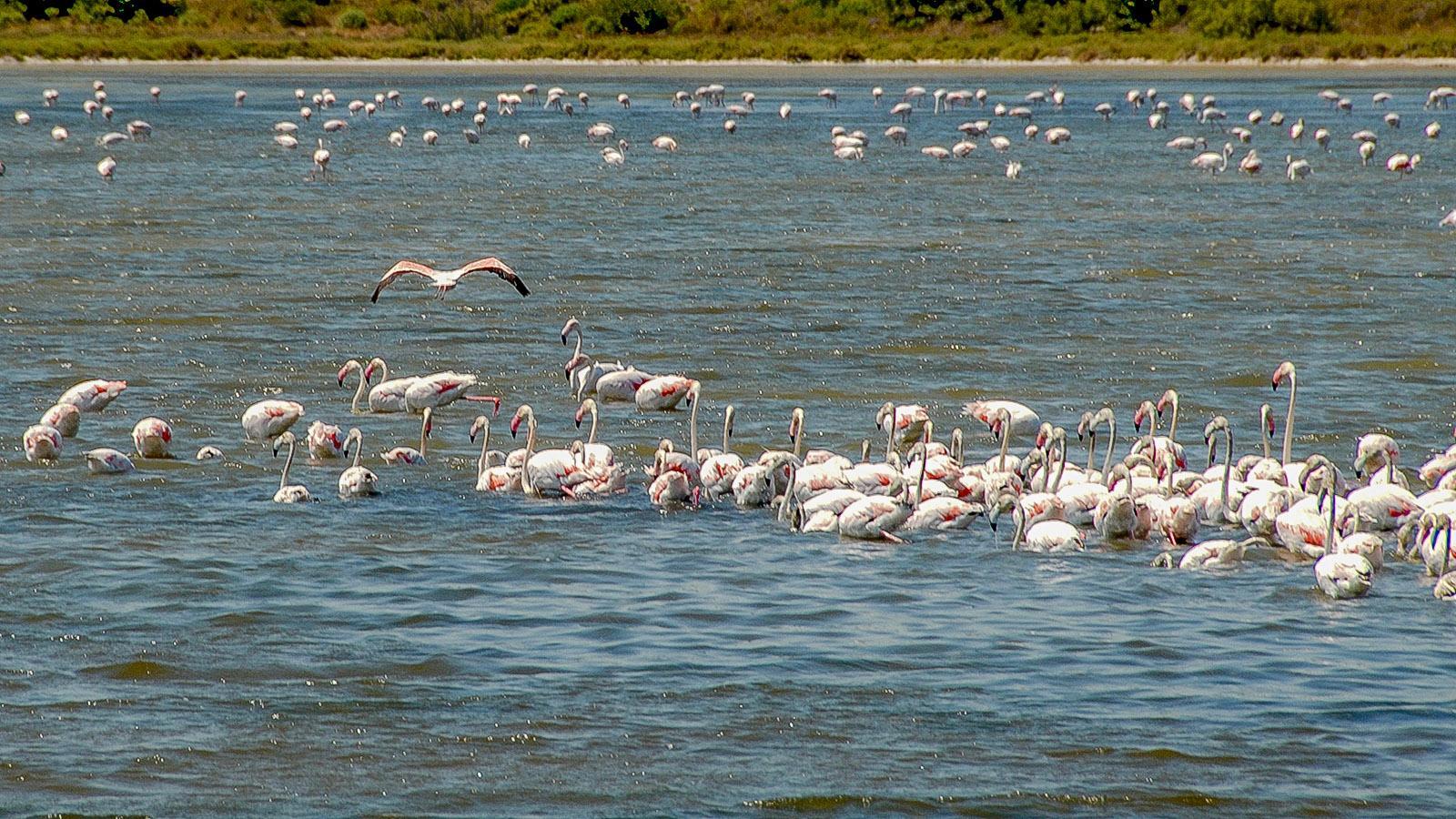 Lagunenseen im Languedoc: In der warmen Jahreszeit sind Flamingos hier Stammgäste. Foto: Hilkw Maunder