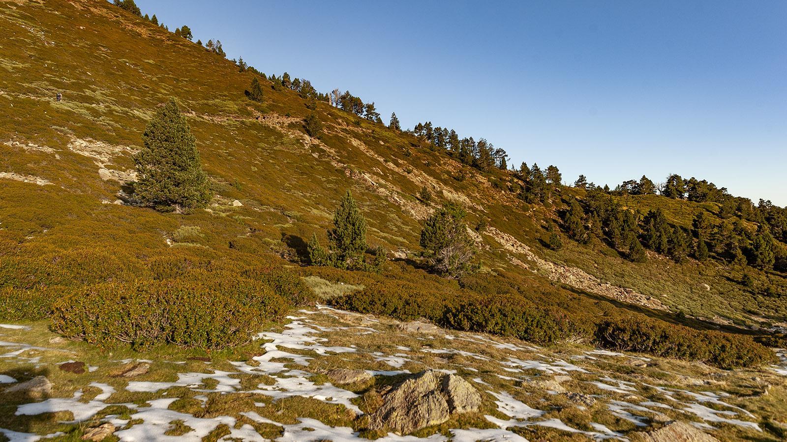 Canigo: Aufstieg zum Pic Joffre. Foto: Hilke Maunder