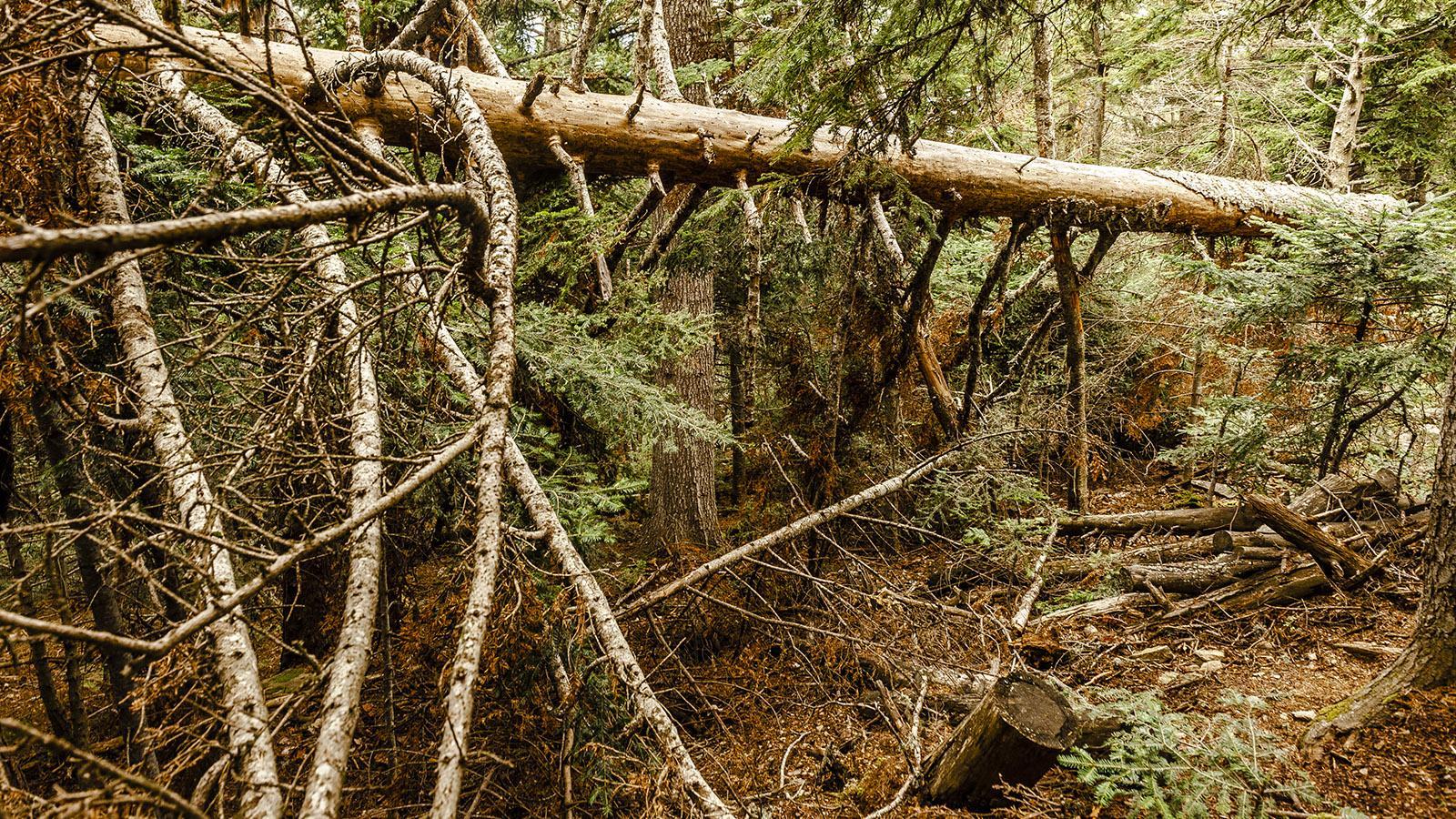 Canigó: Im Wald von Mosquit. Foto: Hilke Maunder