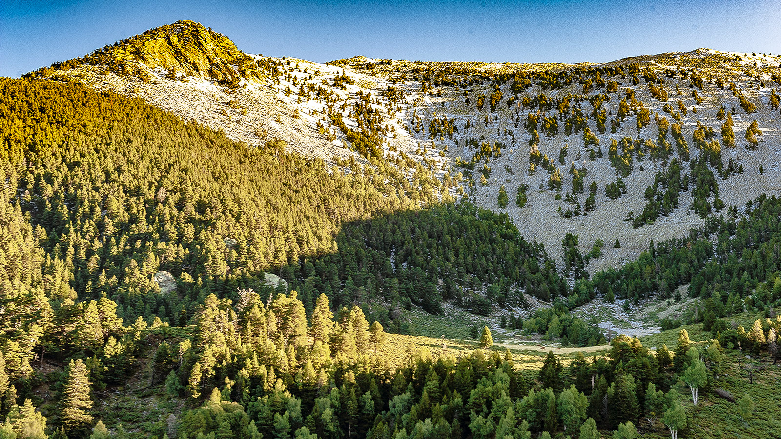 Canigo: Sommerweide bei Marialles. Foto: Hilke Maunder