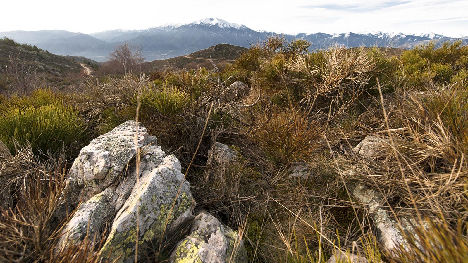Herbst am Col de Roque Jalère. Foto: Hilke Maunder