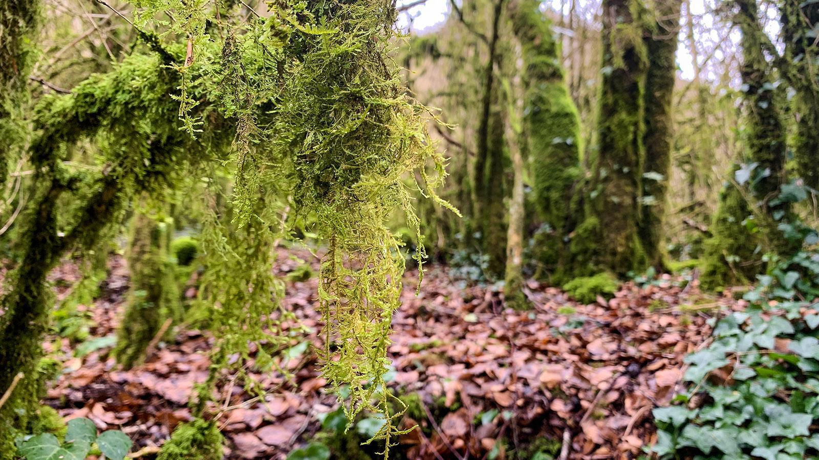 Sals: Mythisch - der Wald der Domaine de l'Eau Salée. Foto: Hilke Maunder