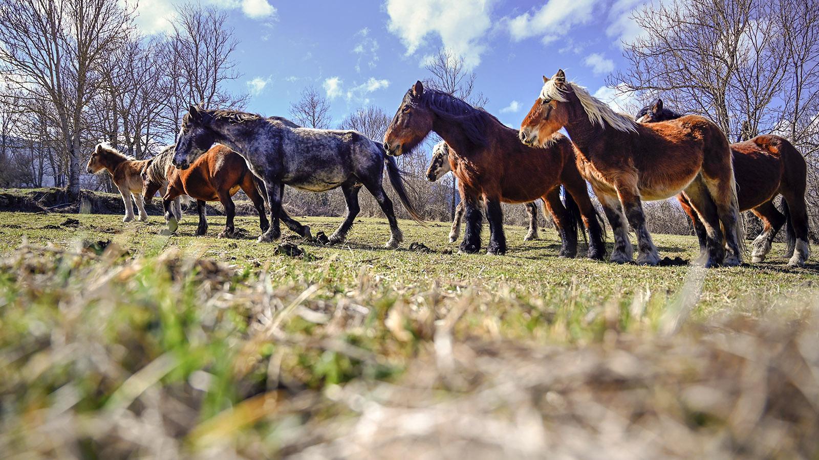 Donezan: halbwilde Pferde. Foto: Hilke Maunder