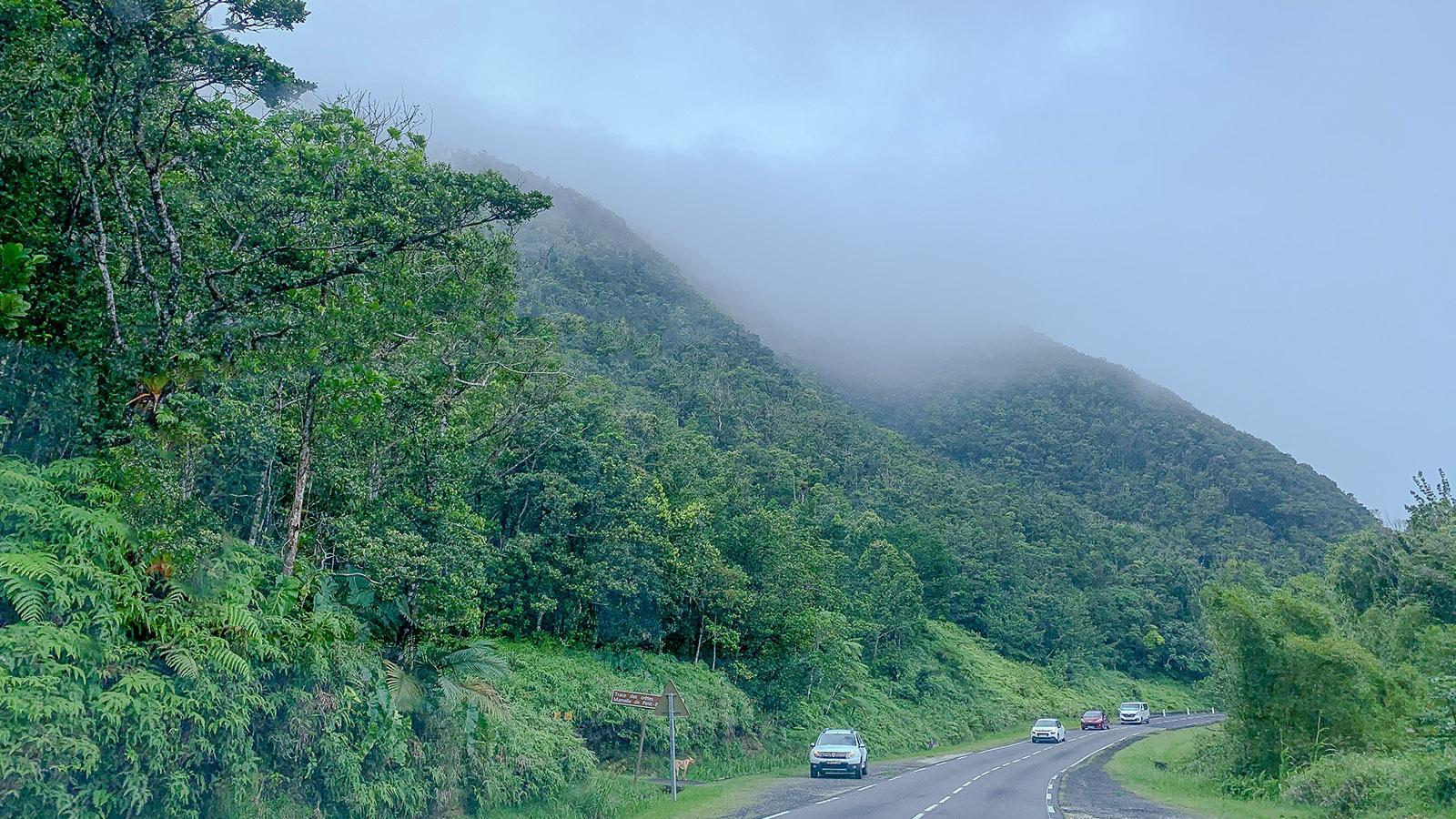 Guadeloupe: la traversée - die Kreisstraße durch die Inselmitte. Foto: Hilke Maunder