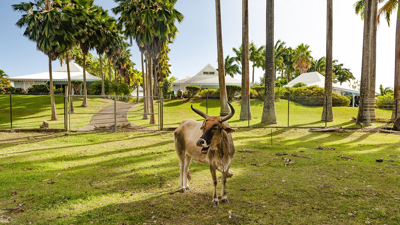 Guadeloupe: Inselkontraste bei Nogent. Foto: Hilke Maunder