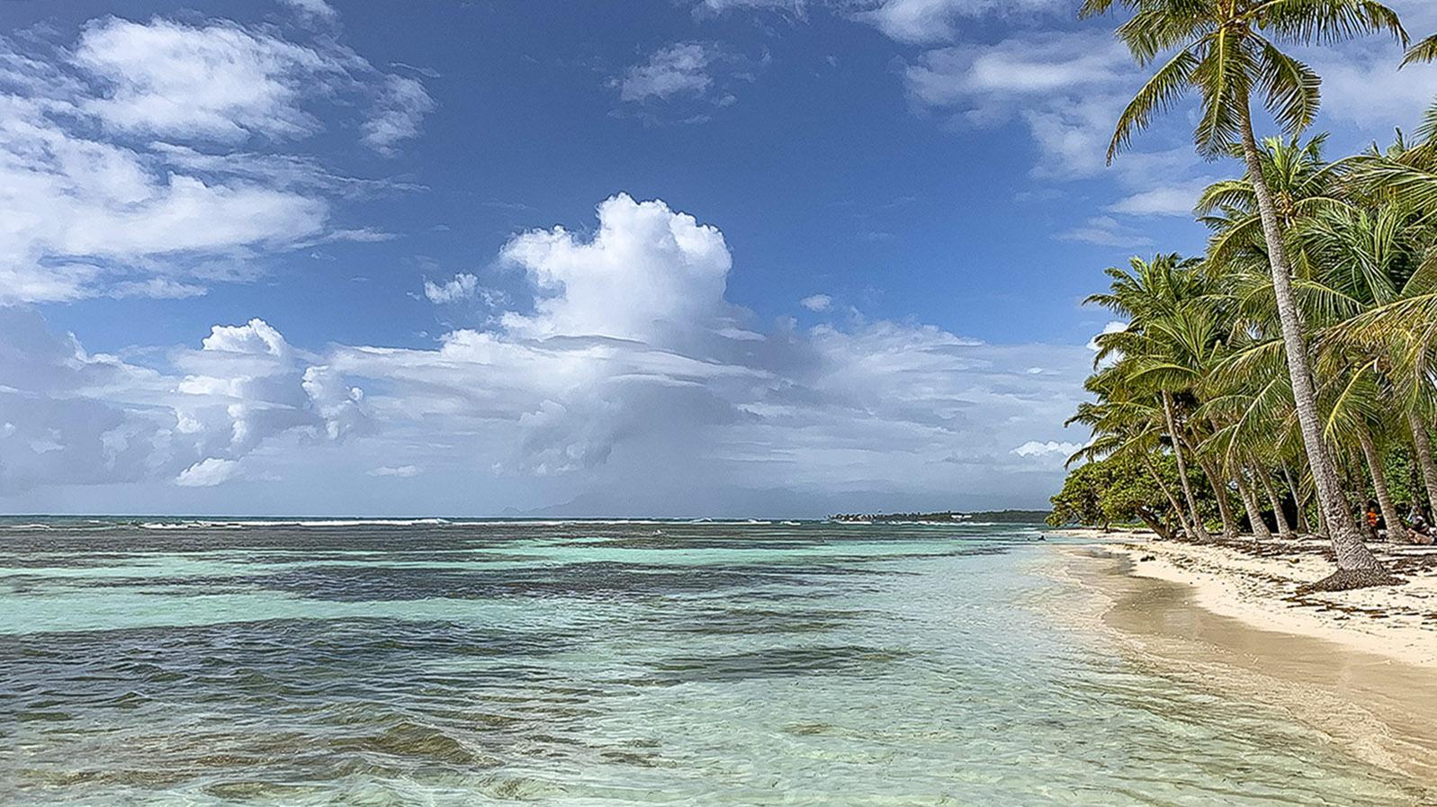 Guadeloupe: der Palmenstrand von Sainte-Anne. Foto: Hilke Maunder