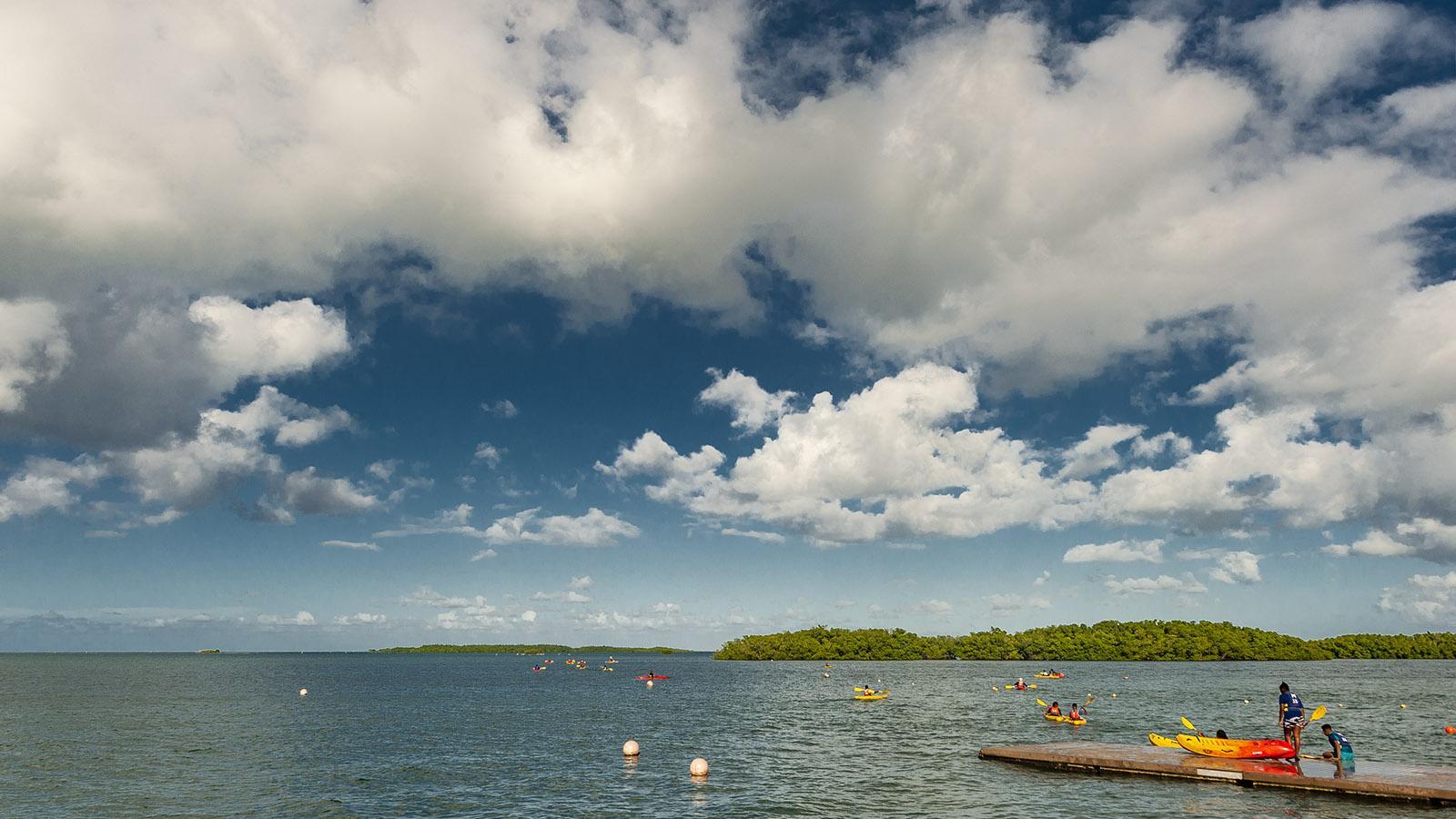 Guadeloupe: die Inselwelt der Mangroven vor Sainte-Rose. Foto: Hilke Maunder