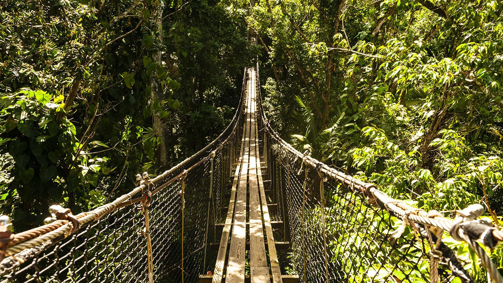 Guadeloupe: Hängebrücke im Zoo