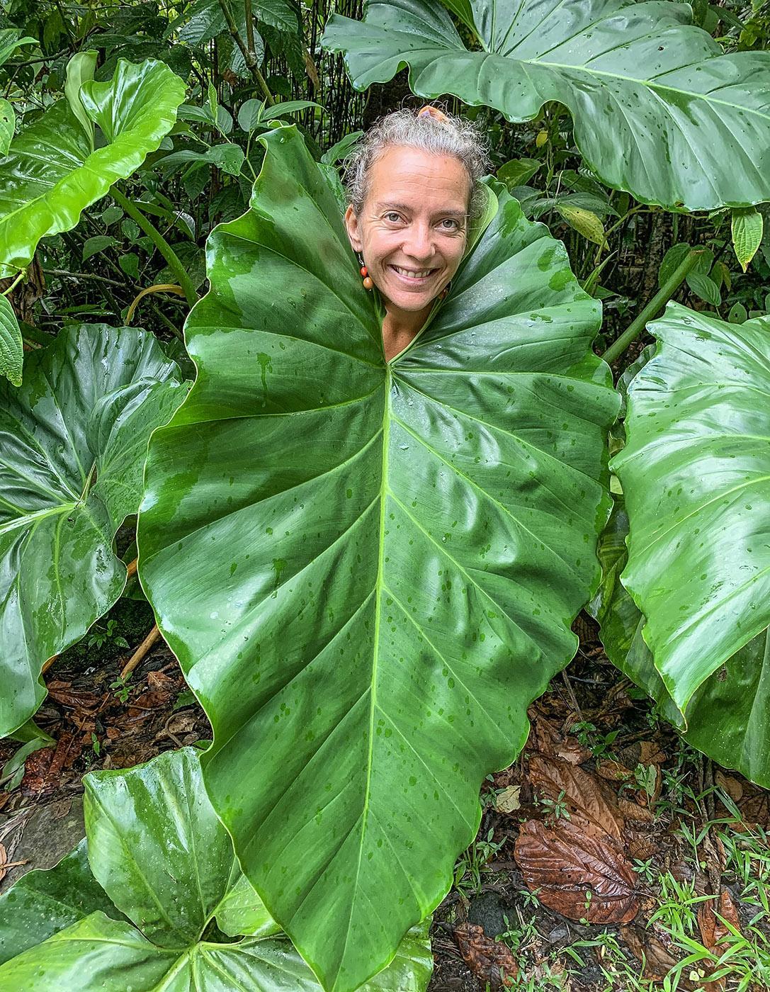 Regenschutz aus dem Regenwald: das Blatt des Philodendron giganteum. Taina Tharsis ist hinein geschlüpft. Foto: Hilke Maunder