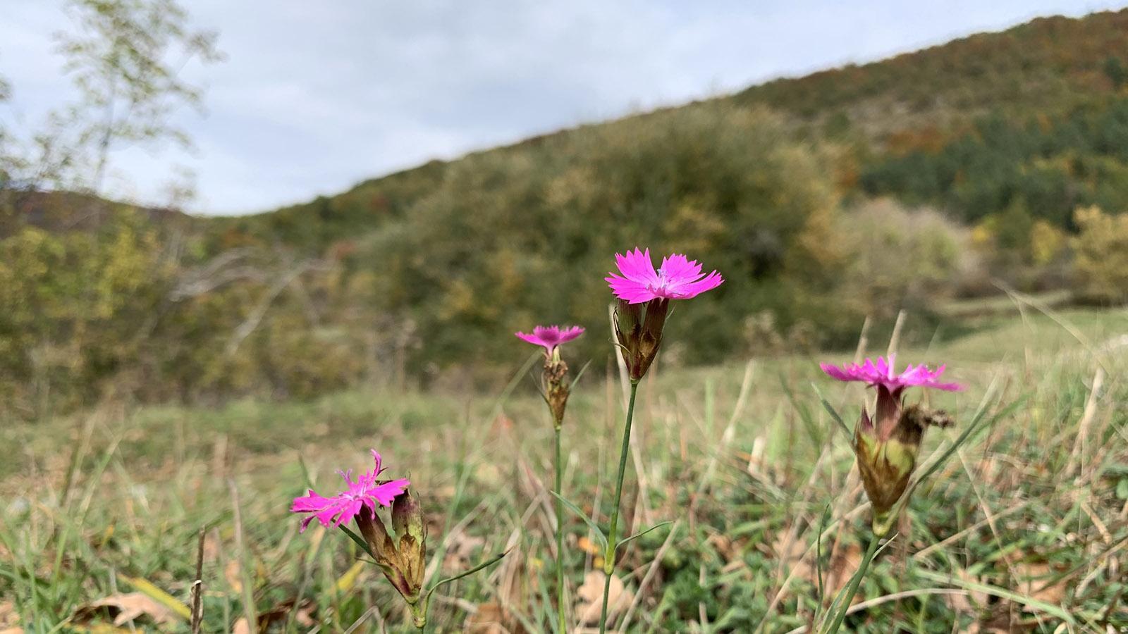 Donezan: Blüten ... auch mitten im Herbst... Foto: Hilke Maunder