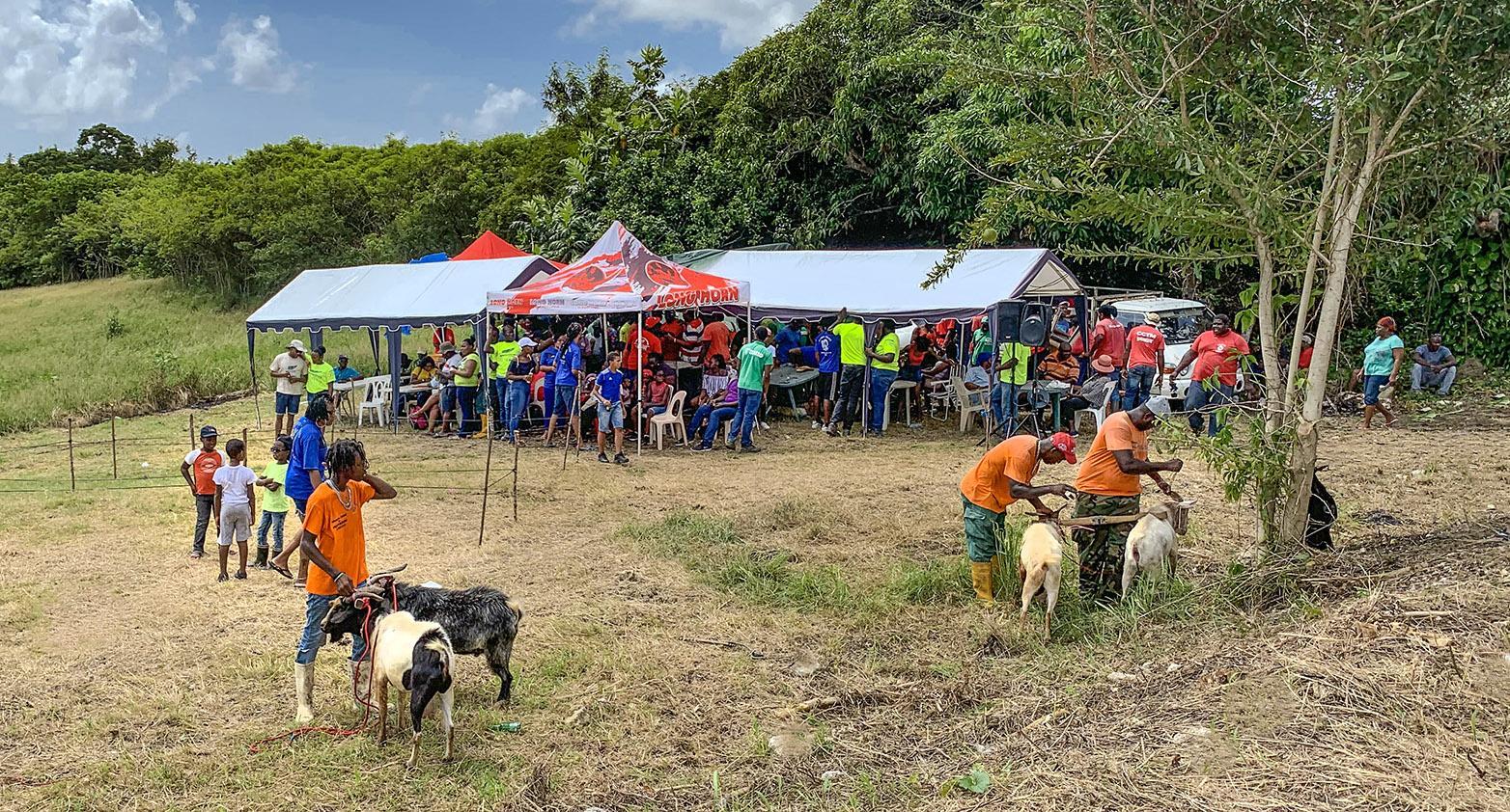 Marie-Galante: Ziegenrennen sind Inseltradition. Früher deckte die Insel ihren MIlchbedarf zu 100 Prozent selbst. Heute wird alles importiert... Foto: Hilke Maunder