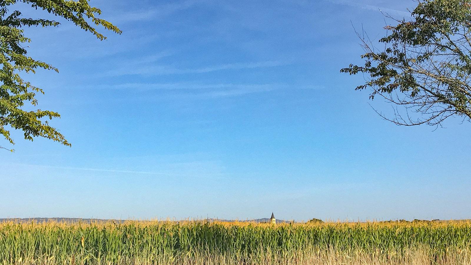 Auvergne: Tischtuchplatt - die Limagne. Bis an den Horizont erstrecken sich dort die riesigen Maisfelder. Foto: Hilke Maunder