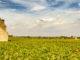 Welterbe: die Weingärten von Vougeot. Foto: Hilke Maunder