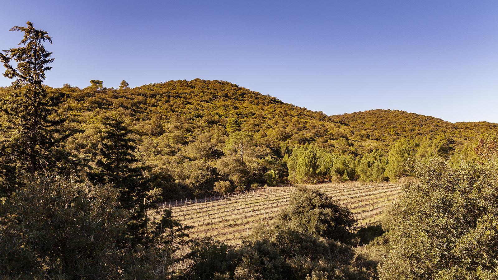Die Parzellen des Fitou verstecken sich gerne hinter mediterranem Grün. Foto: Hilke Maunder