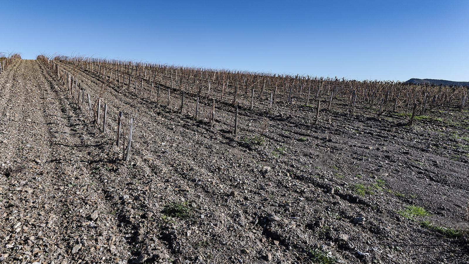 Karg sind die Böden im Fitou. Foto: Hilke Maunder