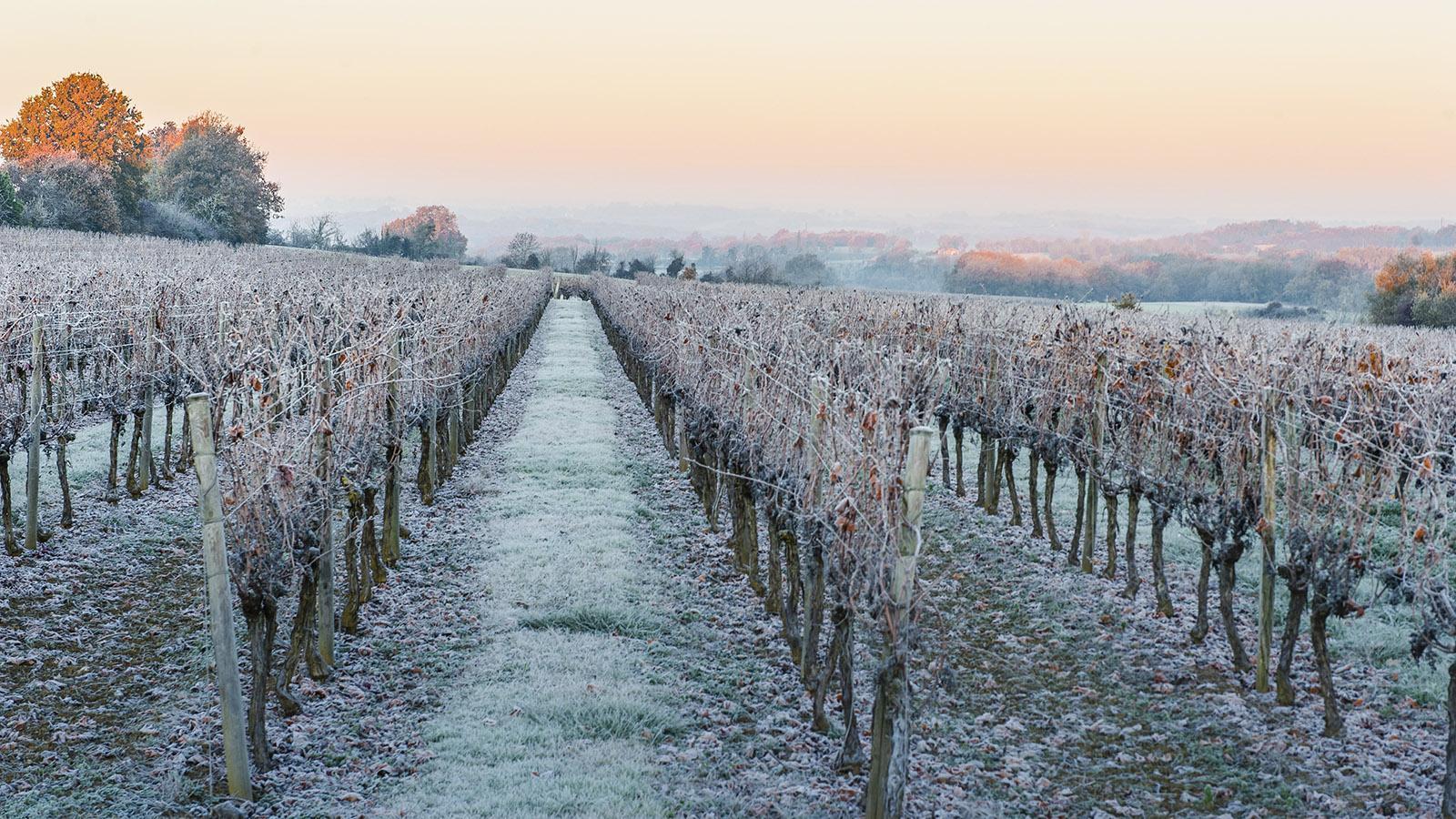Jakobswege: Cassaigne im Winter: Frost im Armagnac-Land.. Foto: Hilke Maunder