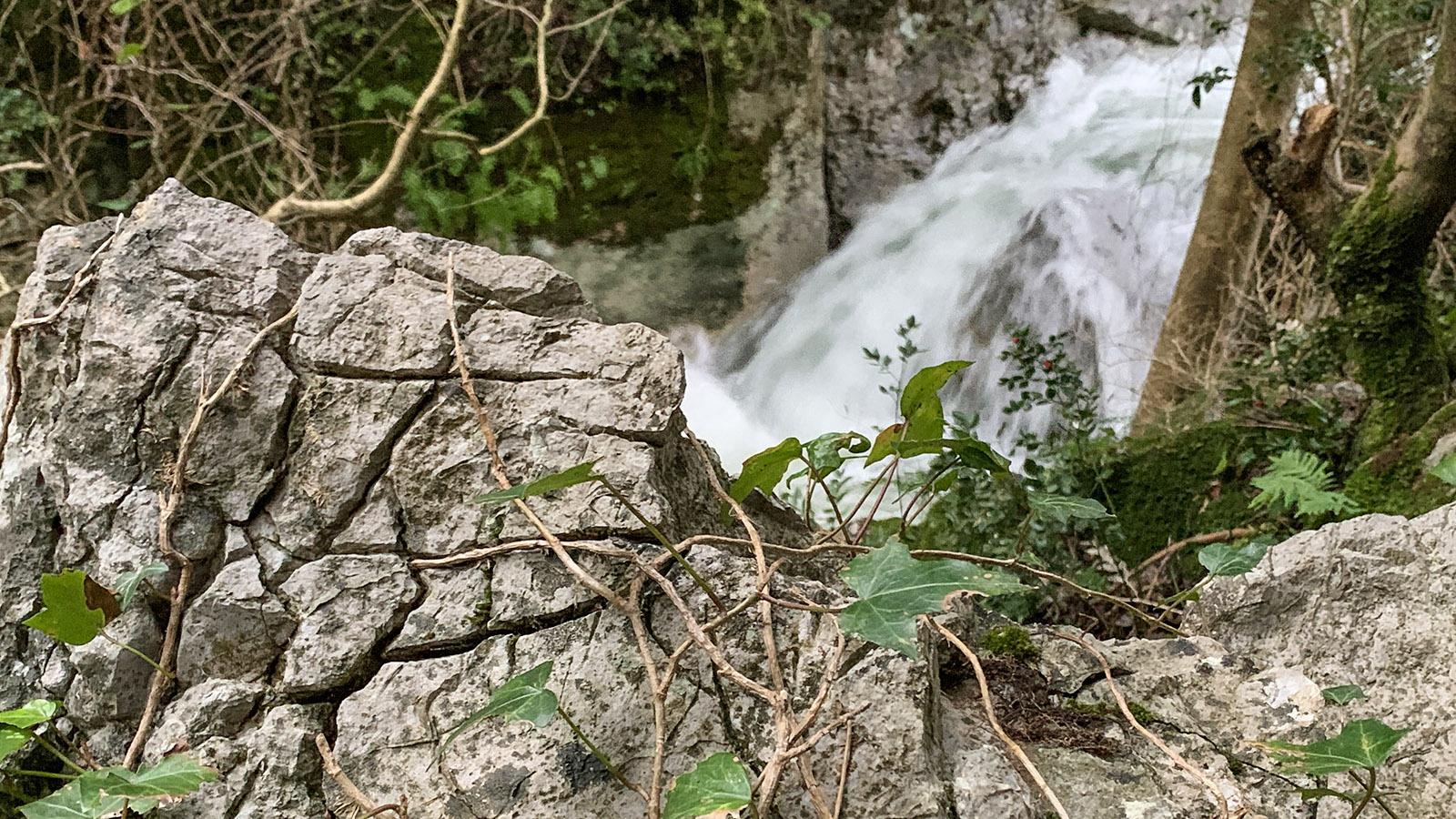 Gorges Saint-Jaume: Efeu erobert Felsen und Bäume. Foto: Hilke Maunder