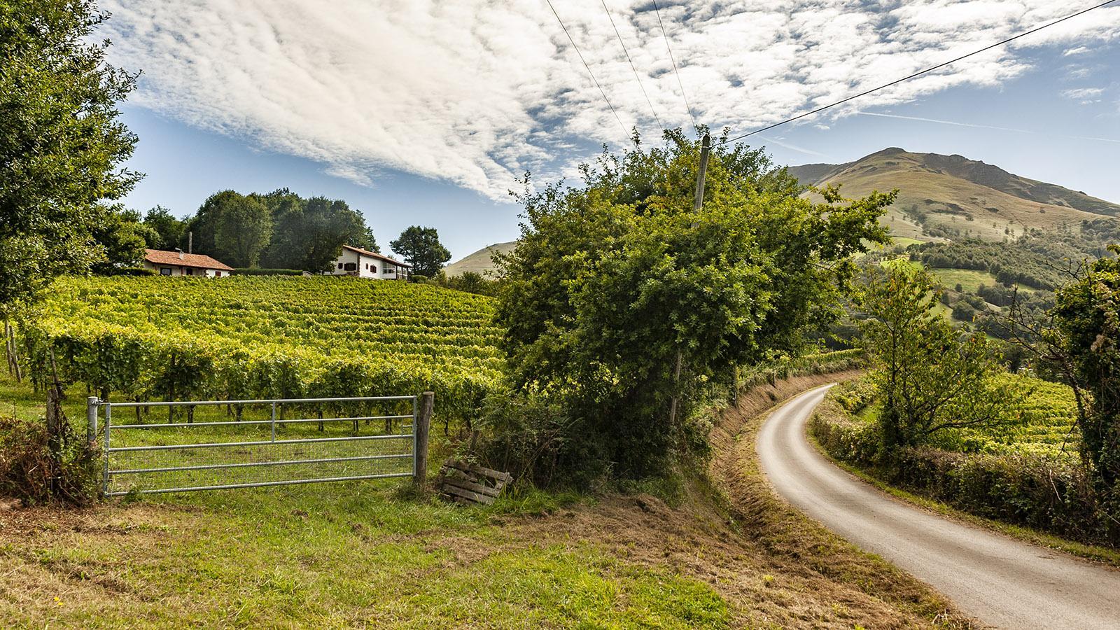 Irouléguy, kleinstes Weinbaugebiet Frankreichs. Foto: Hilke Maunder