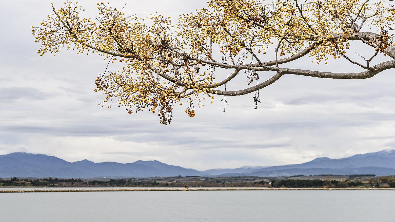 Lac de la Raho: Winter am Lac de la Raho. Foto: Hilke Maunder