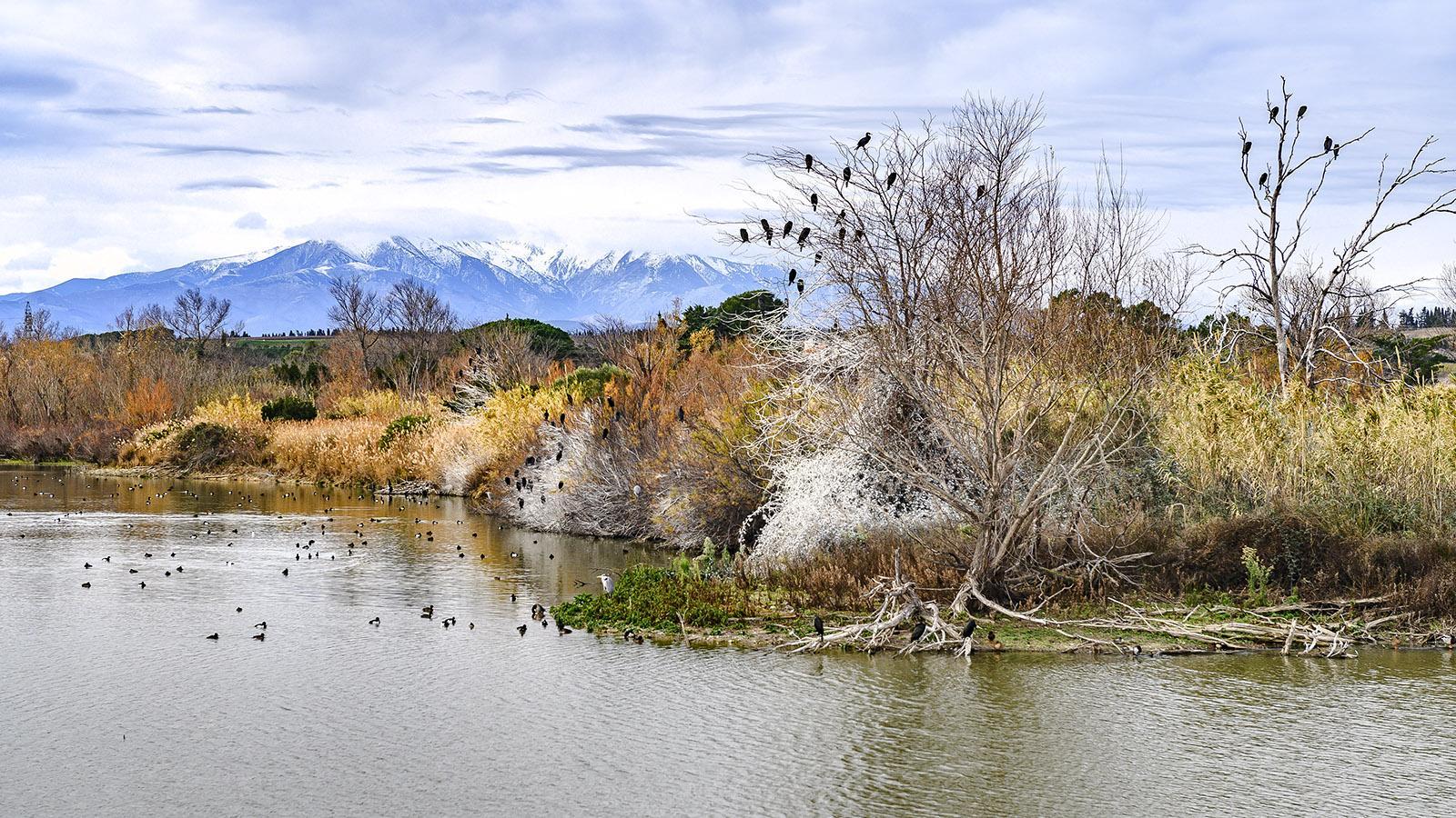 Lac de la Raho: das Naturschutzgebiet des Stausees mit Blick auf die Pyrenäen. Foto: Hilke Maunder