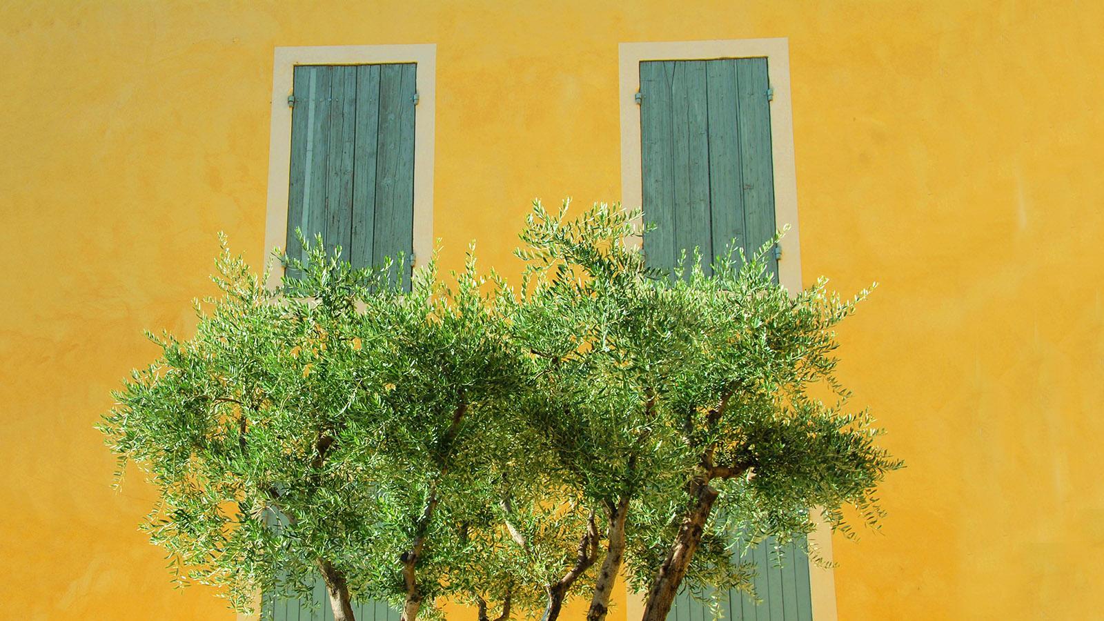 Die Farben des Süden Frankreichs. Foto: Hilke Maunder