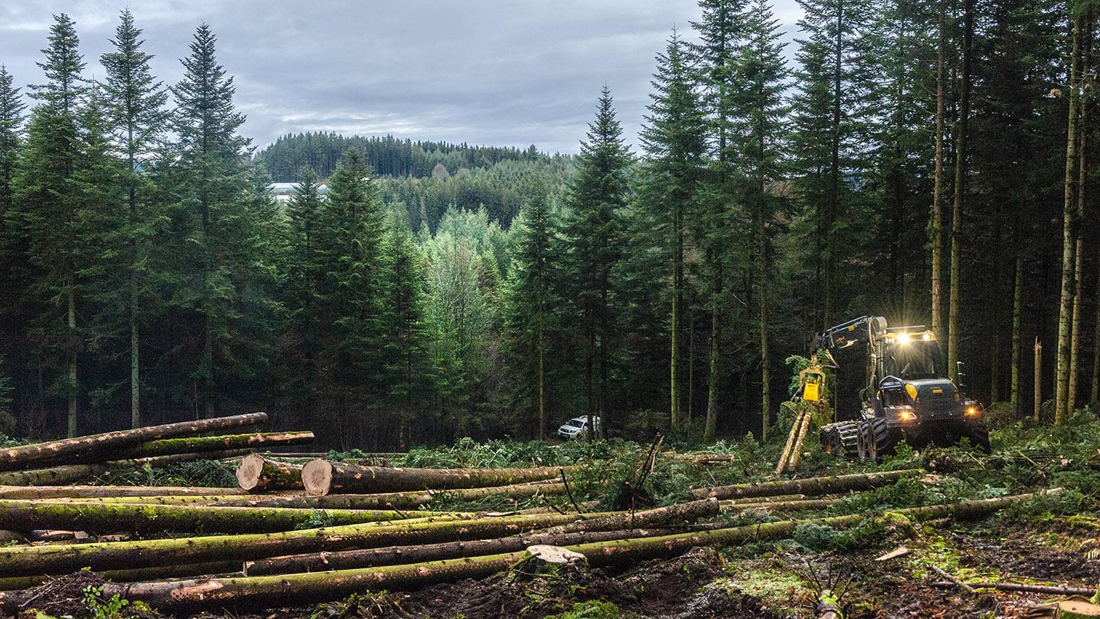 Diagonale du Vide: Holzwirtschaft ist das wichtigste Standbein vieler Kommunen. Foto: Hilke Maunder
