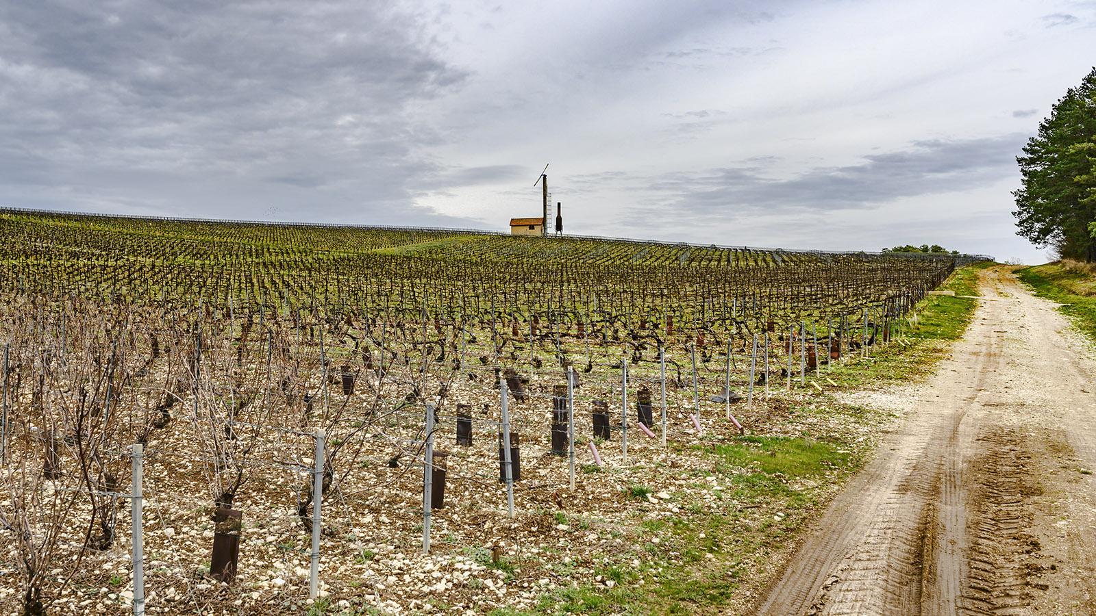 Côte des Bars: Öfen sollen die Weinberge vor Frost schützen. Foto: Hilke Maunder
