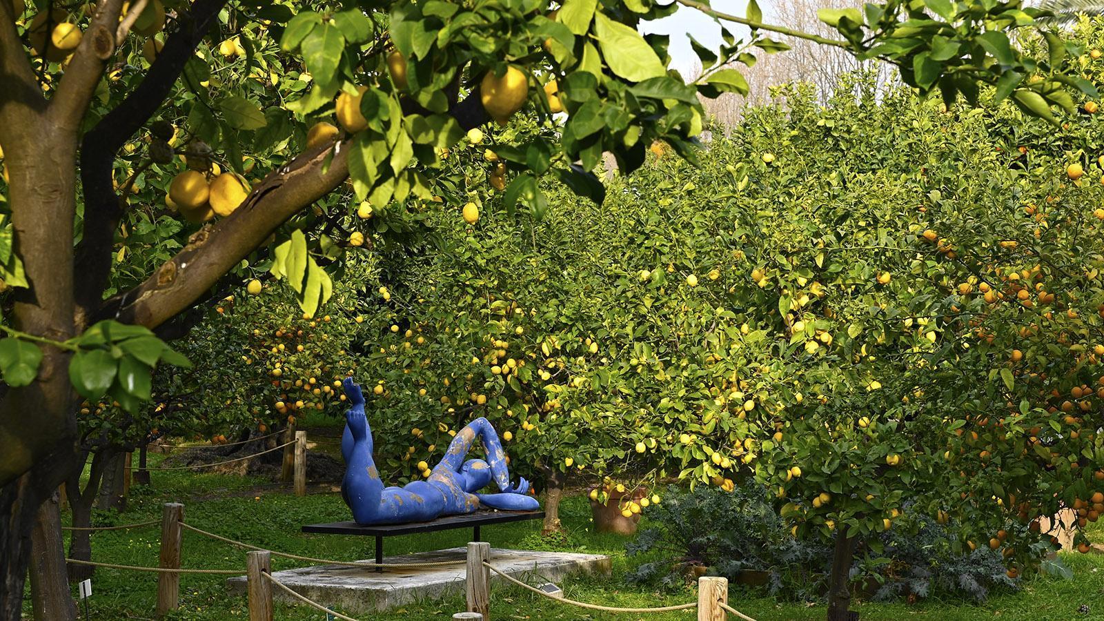 Menton: Jardin d'Agrumes. Foto: Hilke Maunder