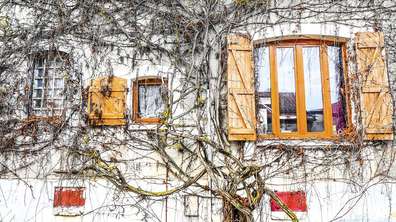 Côte des Bars: Wohnhaus in Celles-sur-Ource. Foto: Hilke Maunder