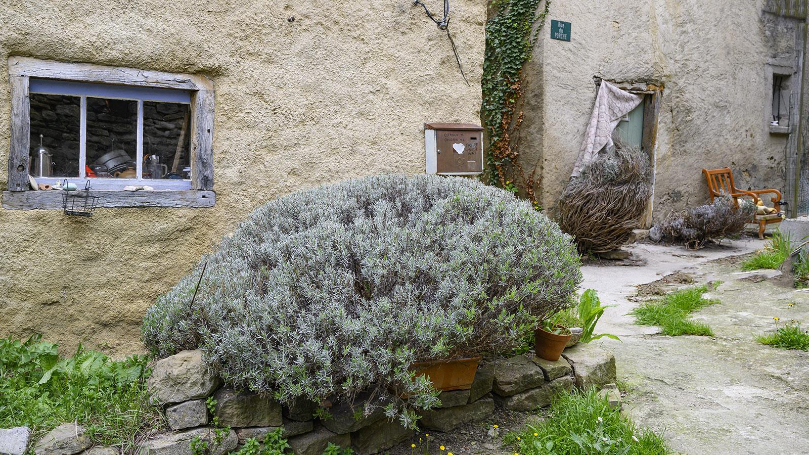La Serpent: Lavendel in XXL schmückt dieses Haus. Foto: Hilke Maunder