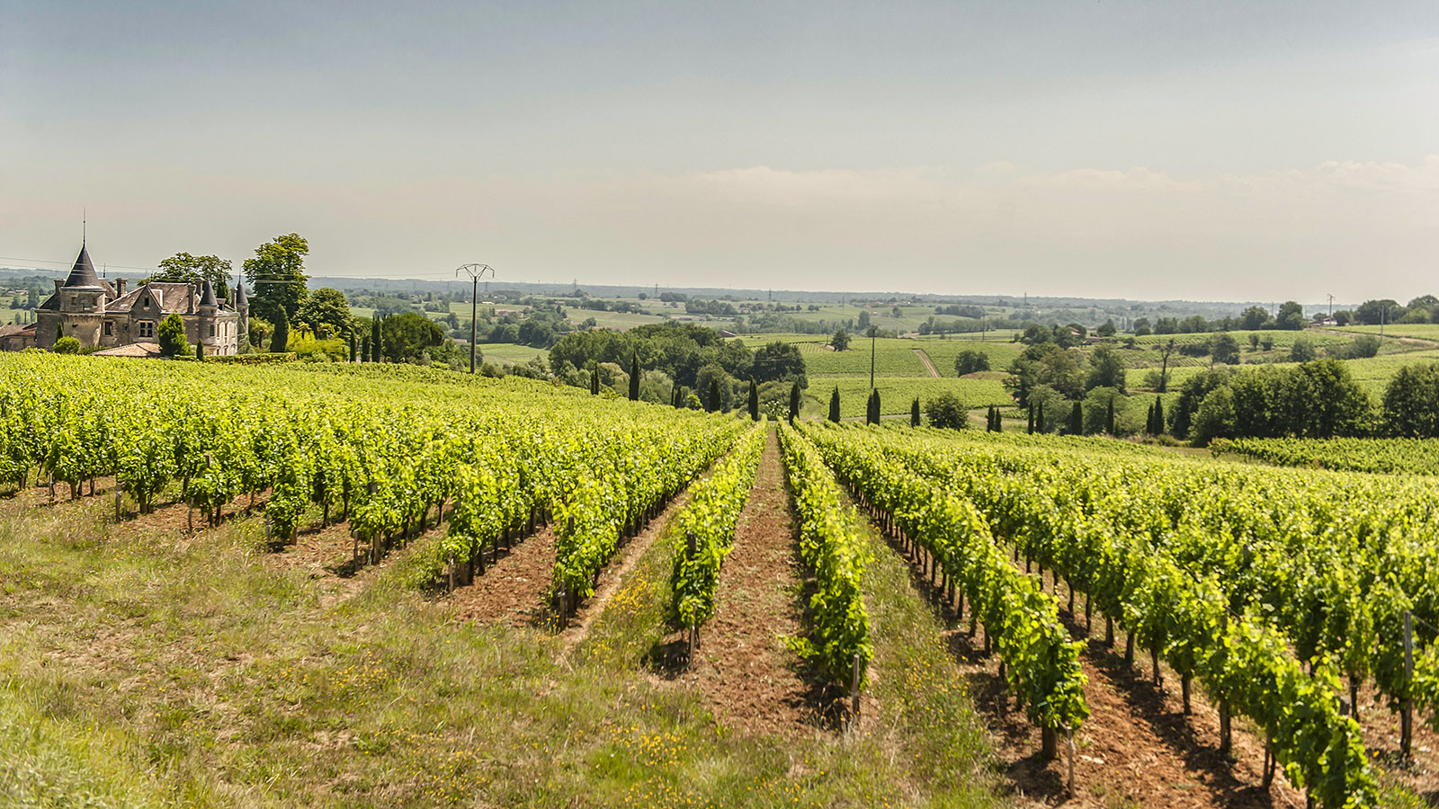 Die Weingärten des Château de la Grave bei Bourg-sur-Gironde. Foto: Hilke Maunder