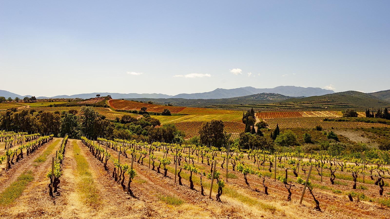 Les Aspres: die Weingärten von Terrats. Foto: Hilke Maunder