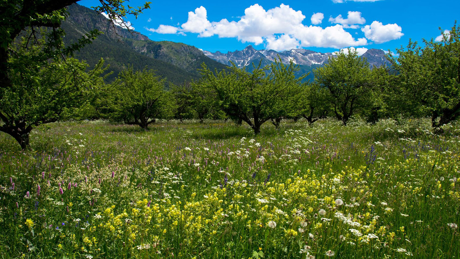 Blumenwiese bei Vallouise. Foto: Tanja Midgartson