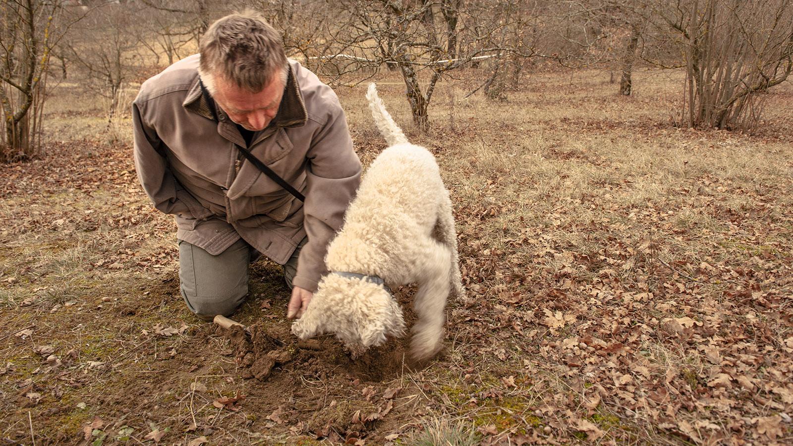 Bambou, der Trüffelhund von Bruno Chartron, ist im Trüffelhain fündig geworden. Foto: Hilke Maunder