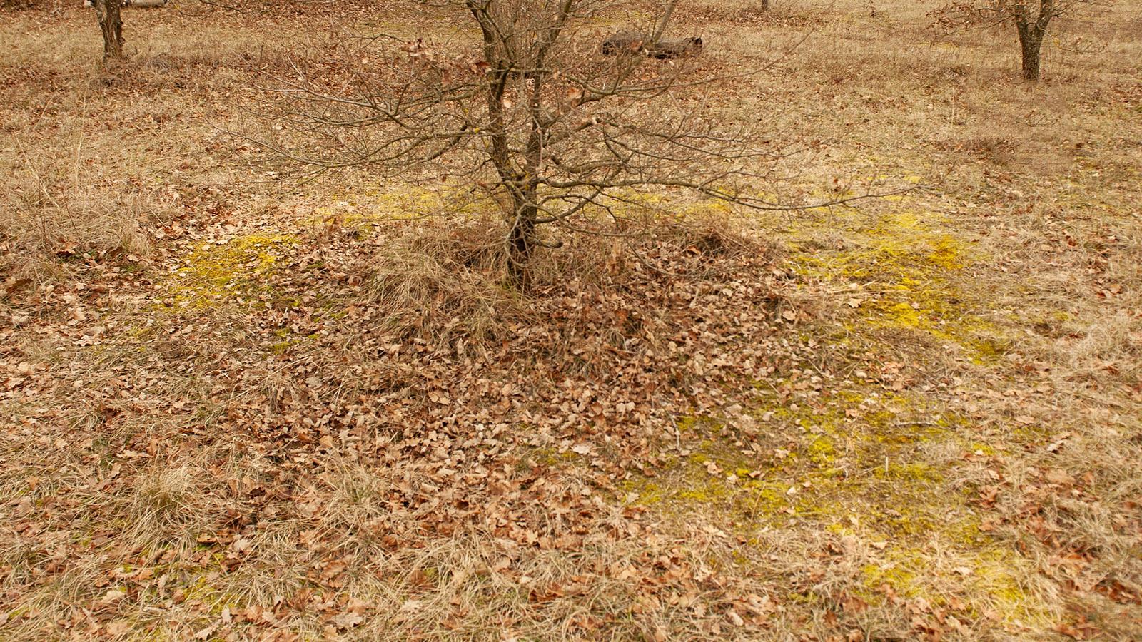 Hexenringe verraten Bruno Chartron, wo Trüffel zu finden sind. Foto: Hilke Maunder