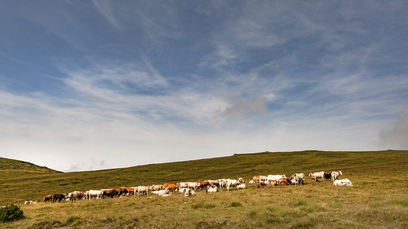 Rinde auf der Sommerweide am Col de Pailheres. Foto: Hilke Maunder