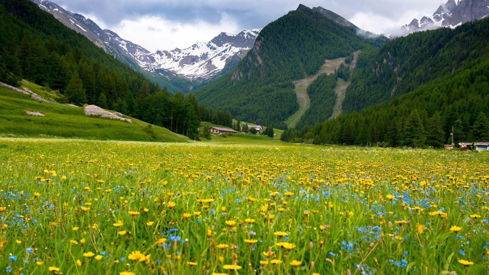 Blütenwiese im Queyras. Foto: Hilke Maunder
