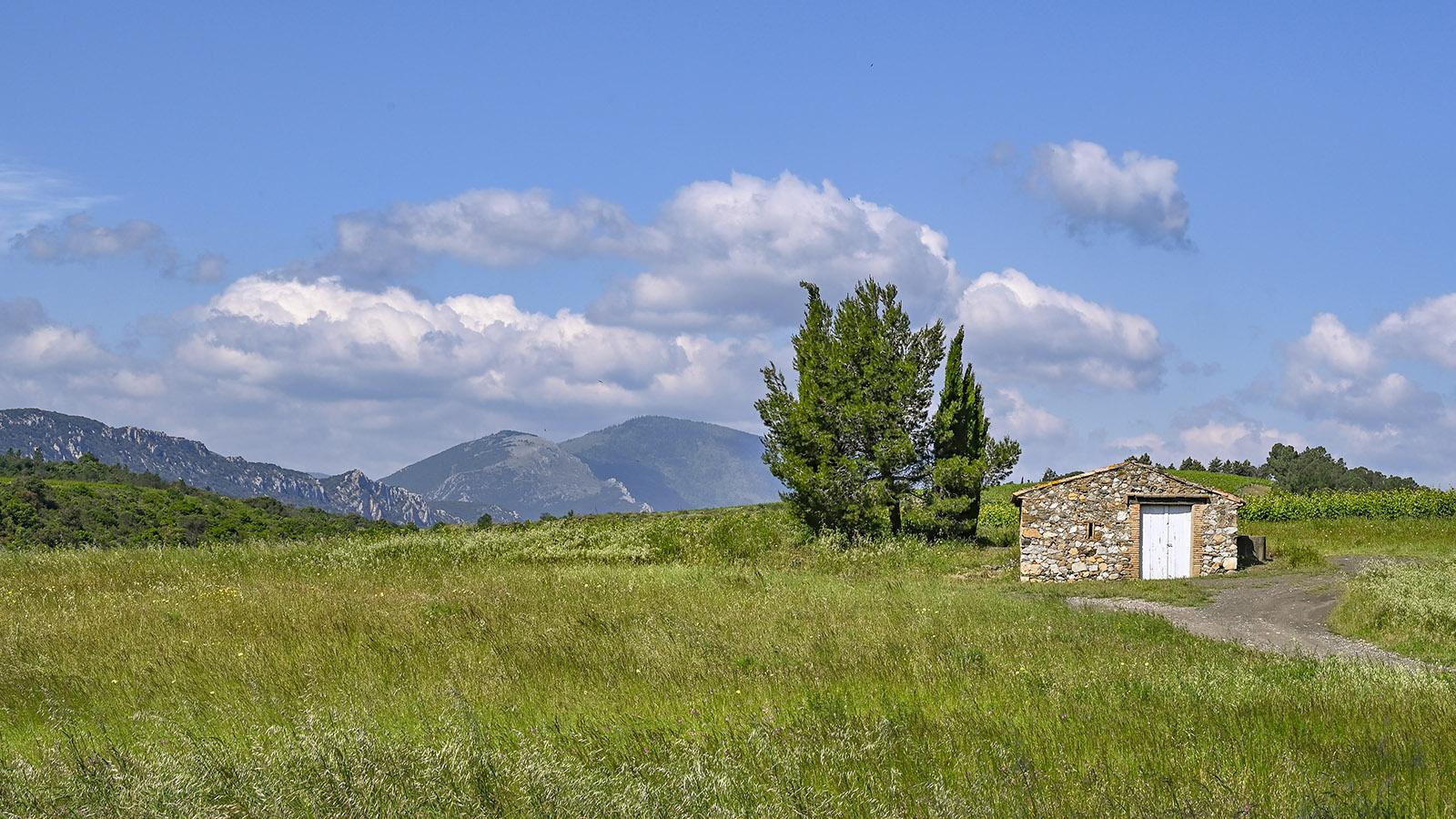 Im Fenouillèdes weiden die Schafe des Winters auf diesen Weiden. Im Sommer blühen dort viele seltene Orchideen. Foto: Hilke Maunder